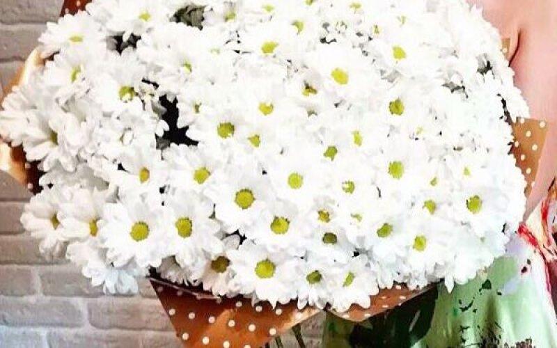 Букет из 301 белой ромашки в оформлении