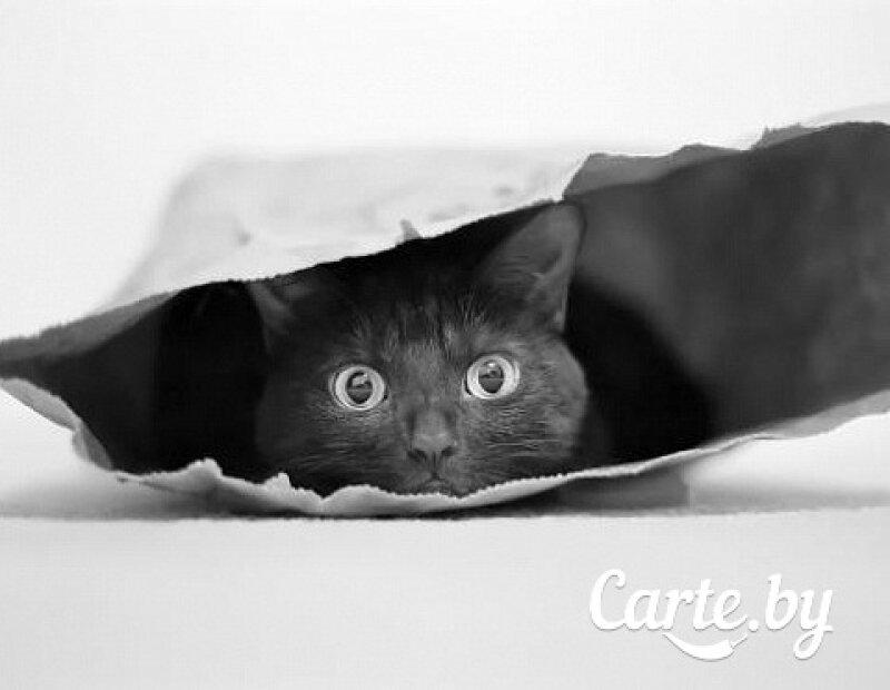 Суши-сет «Кот в мешке»