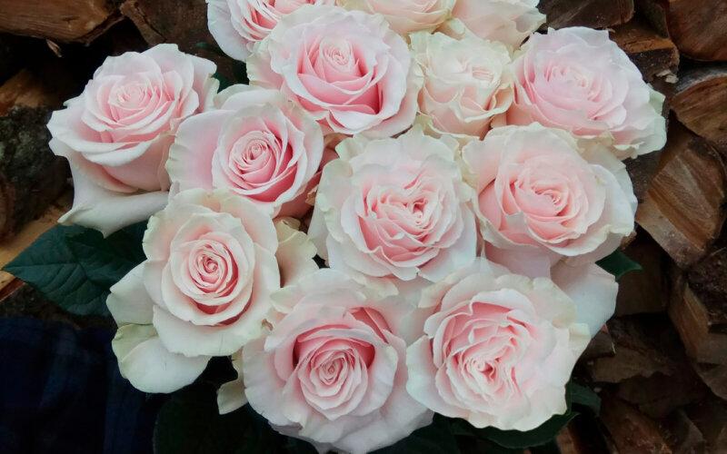 Роза светло-розовая (70см)