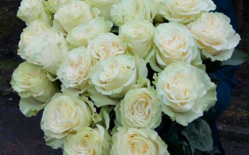 Роза белая (70см)