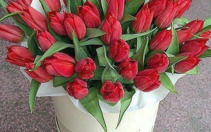 51 тюльпан в цилиндре «Время любить»