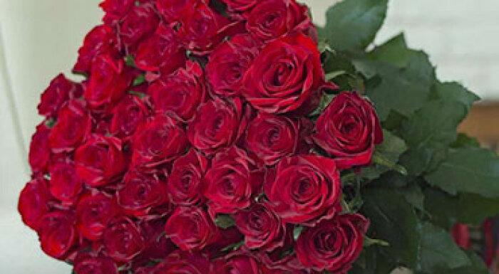 Bella roza