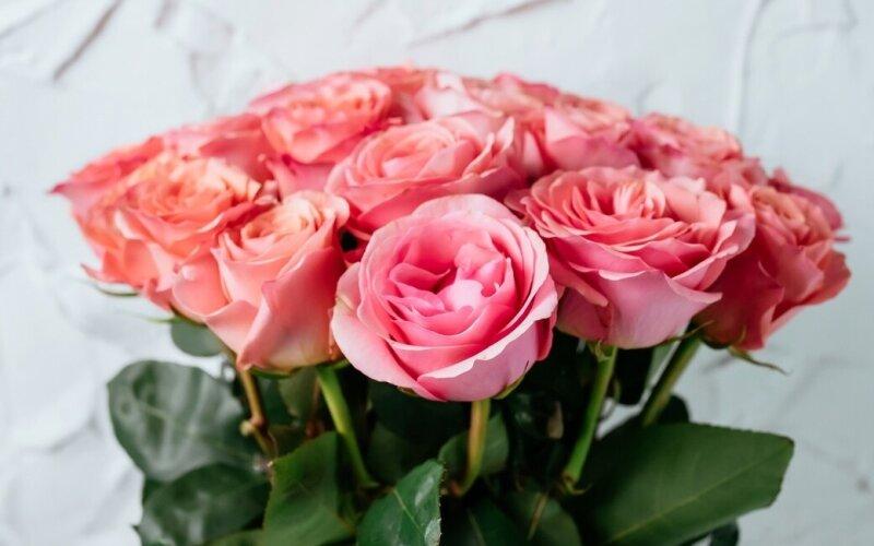 Роза 50 см (Эквадор)
