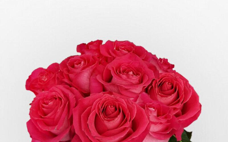Роза 40 см малиновая