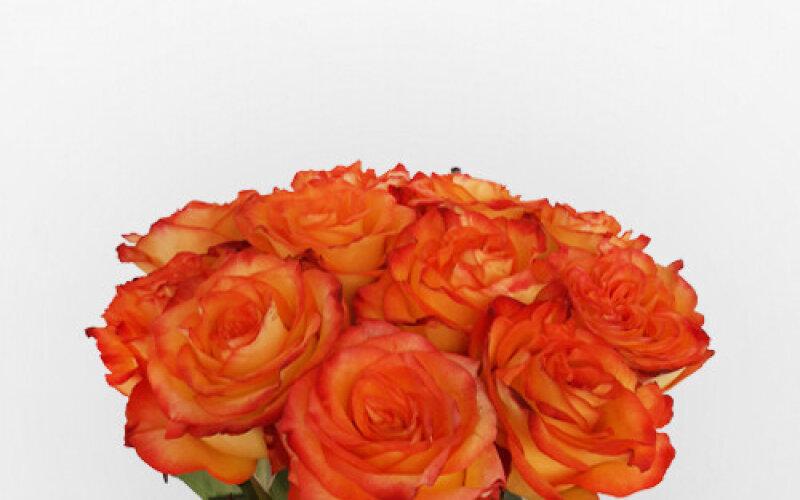 Роза 40 см оранжевая